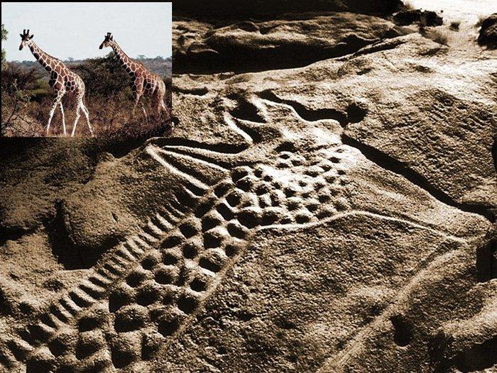 the worlds largest rock art petroglyph dabous giraffe - 700×526
