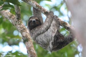 Sloth mgi
